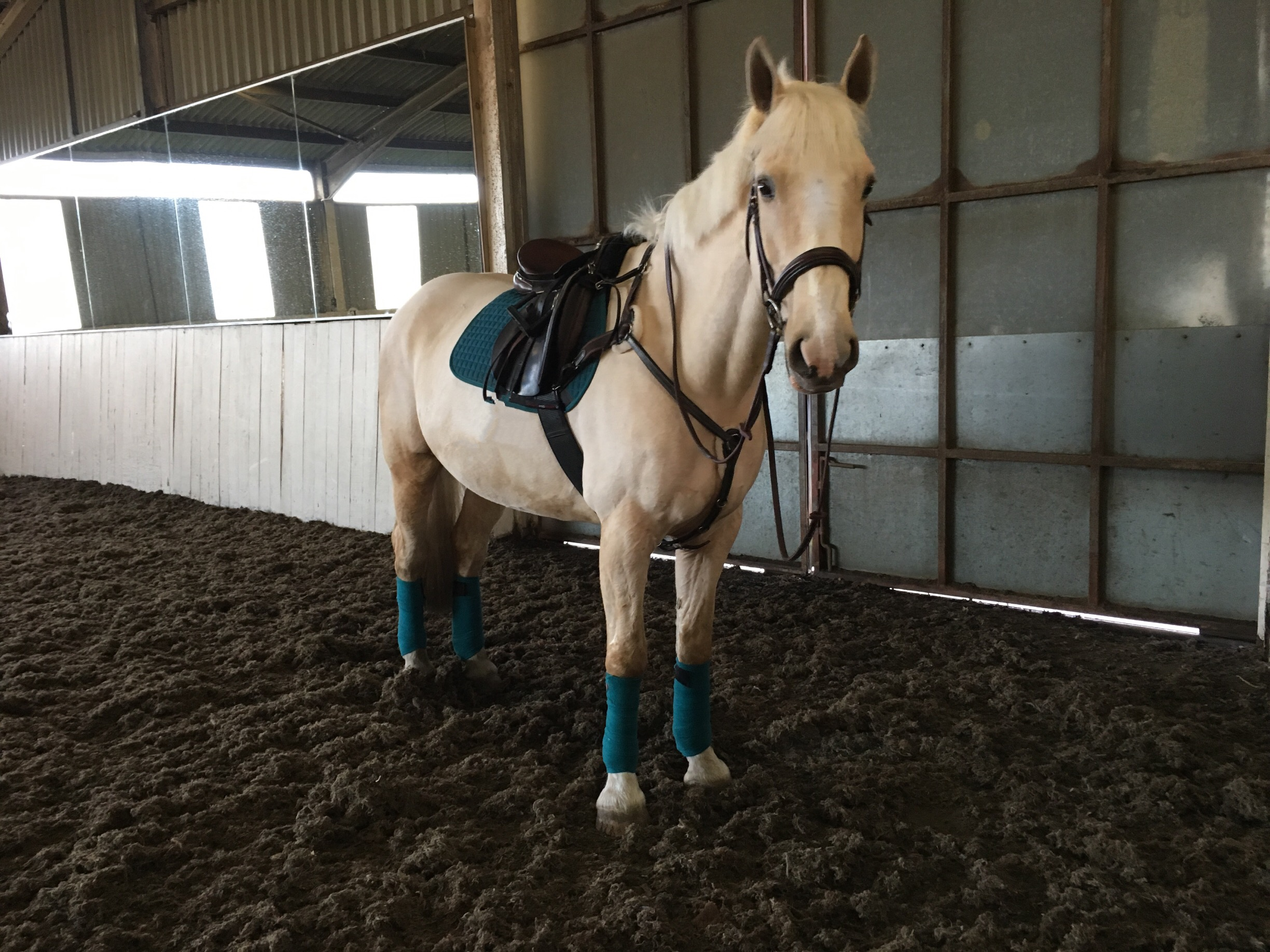 5 Best Colours To Put On Your Palomino The Hay Barn